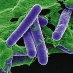 4 кг бактерии Clostridium Botulinum достаточно, чтобы убить всё человечество….
