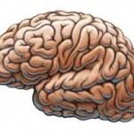 Как обмануть собственный мозг.