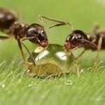 Немного из жизни насекомых…