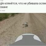 Google maps утверждают что что убийство ослика было самозащитой