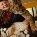 Ральф — самый крупный кролик в мире, его вес превышает 25 килограммов, а в длину он уже более 130 са…