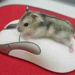 День компьютерной мышки.