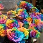 Happy Rose – это особенные разноцветные розы, при взгляде на которые вам сразу становится весело! Бл…