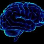 Интересные факты о мозге.