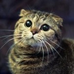 Человек весит, в среднем, в 20-30 раз больше кошки. И если в кошку кинуть тапком, это равносильно, ч…