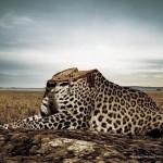 GreenPeace: «Вырубаются не только деревья»…