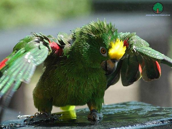 Фото милых попугаев.