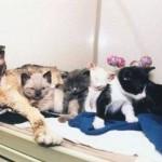 Кошка заходила в горящий дом 5 раз, чтобы вынести каждого своего малыша